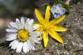 Three verietã  of wildflowers on a log Royalty Free Stock Images
