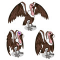 Three vultures, with spread wings, common and sick