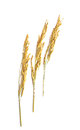 Three Wheat  on white background Royalty Free Stock Photo