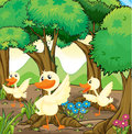 Three white ducks in the middle of the woods illustration Stock Images