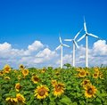 Three wind turbines in a sunflowers Royalty Free Stock Image
