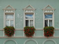Three windows and flowers on the green wall Royalty Free Stock Photo