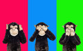 Three wise monkeys. Royalty Free Stock Photo