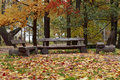 Three wooden benches in the autumn park. Royalty Free Stock Photo