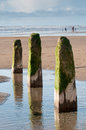 Three wooden posts forming part of an old breakwater Royalty Free Stock Photo