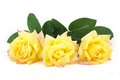 Three yellow roses Stock Images