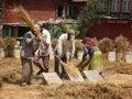 Threshing grain by hand Royalty Free Stock Photo