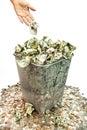 Throwing Away Money Royalty Free Stock Photo