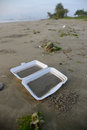 Thrown away takeout carton on beach Royalty Free Stock Photo