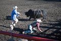 Thrown from the bull a competitor scrambles to avoid being gored by at hairy hill rodeo hairy hill alberta july Stock Photography
