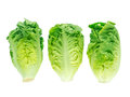 Thrre lettuce salad heads Royalty Free Stock Photo