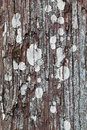Thuja tree background wood moss and lichen growing on trunk Stock Photo