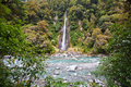 Thunder creek fall in tropical forest of new zealand Stock Photography