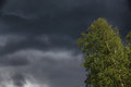 Thunderclouds. Tree. Stock Photos