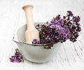 Thyme flowers in a mortar on old wooden background Stock Images