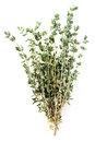 Thyme fresh herb Royalty Free Stock Photo