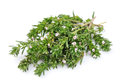 Thyme fresh herb isolated on white background Royalty Free Stock Photos