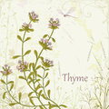 Thyme herb on floral background Royalty Free Stock Photo