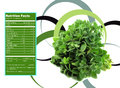 Thyme herb nutrition facts creative design for with label Royalty Free Stock Image