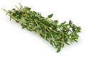 Thyme Herbs Royalty Free Stock Photo