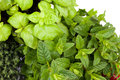 Thyme mint basil fresh aromatic plants mix of and Royalty Free Stock Photo