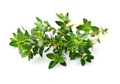 Thyme spice on a white background Royalty Free Stock Photography