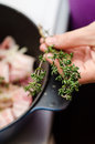 Thyme sprig a chef holding a of a in preparation of spicing food with it Stock Photo