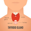 Thyroid gland on a man silhouette