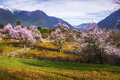Tibet's spring