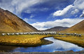 Tibet scenery of China Royalty Free Stock Photo