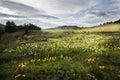 Tibetan alpine grassland Royalty Free Stock Photo