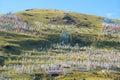 Tibetan mountain slope Royalty Free Stock Photo