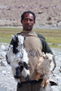 Tibetan nomad with goatling india ladakh june two goatlings poses for a photo on june in ladakh jammu and kashmir state north Stock Photos