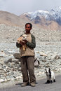 Tibetan nomad ladakh india june with goats poses for a photo on the road to spangmik village on june in jammu and kashmir Stock Photo