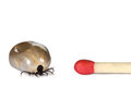 Ticks size comparison to matchstick Stock Photos