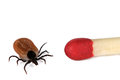 Ticks size comparison to matchstick Royalty Free Stock Photo