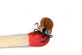 Ticks size comparison to matchstick Royalty Free Stock Images