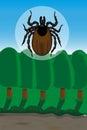 Ticks are vectors of lyme borreliosis and tick borne encephaliti encephalitis is a viral infectious disease involving the central Royalty Free Stock Photo
