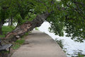 Tidal basin walkway lined and shaded by trees overhanging the sidewalk in washington dc Stock Image