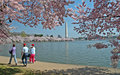 Tidal Basin and Washington Monument with Cherry Blossoms Royalty Free Stock Photo