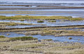 Tidal influence in waddenzee the netherlands wadden sea is largest unbroken system of intertidal sand and mud flats world it is a Stock Photos