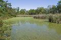 Tidal Pond with Algae Stock Image