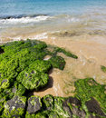 Tidal pool Stock Image