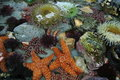 Tide Pool Animals Royalty Free Stock Image