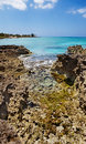 Tide pools on Grand Cayman Royalty Free Stock Images
