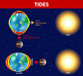 Tides vector diagram depend where the sun and moon are relative to the earth gravity and inertia creating tidal bulges on opposite Royalty Free Stock Photos