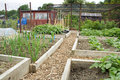 Tidy vegetable garden allotment with raised beds Royalty Free Stock Photography