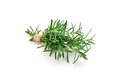 Tied bunch of fresh rosemary, isolated on white