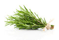 Tied fresh rosemary on a white background Royalty Free Stock Images
