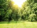 Tiergarten berlin meadow trees and sunlight in Royalty Free Stock Photos
